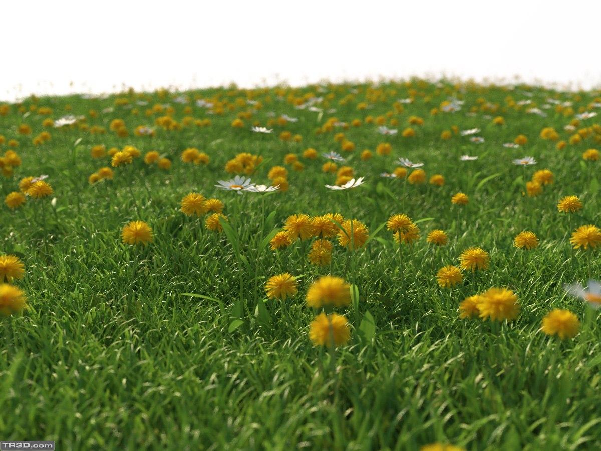 proxy-grass.jpg