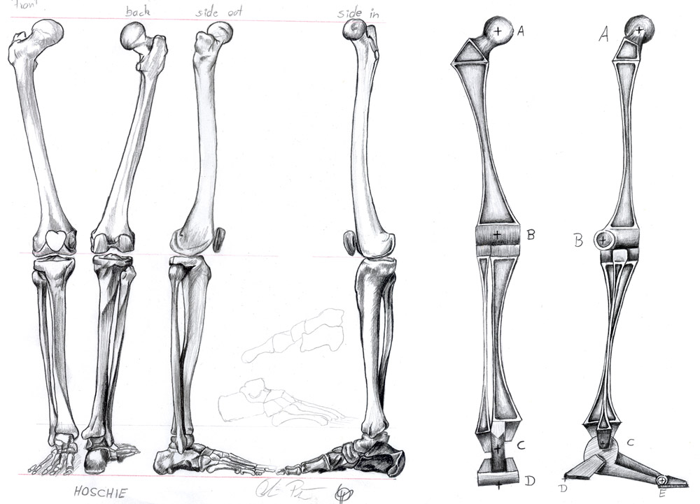 рисунки костей ног