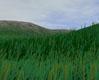 XSI da hair kullanarak çimen yapımı