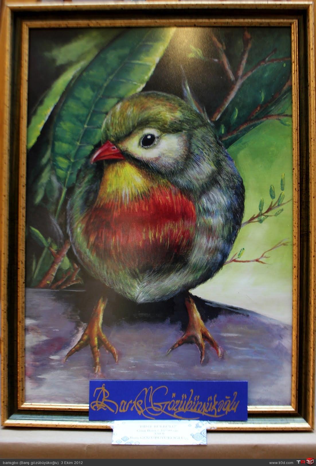 nightingale bird 1