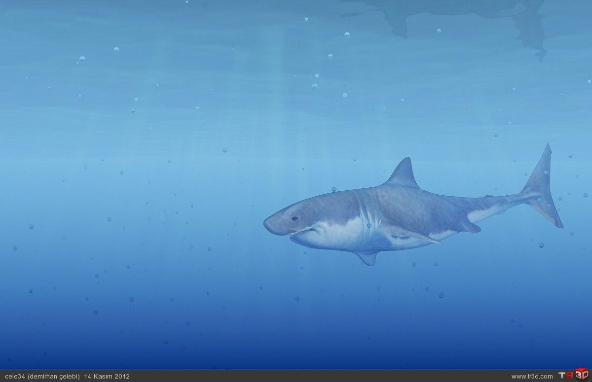 katil köpekbalığı