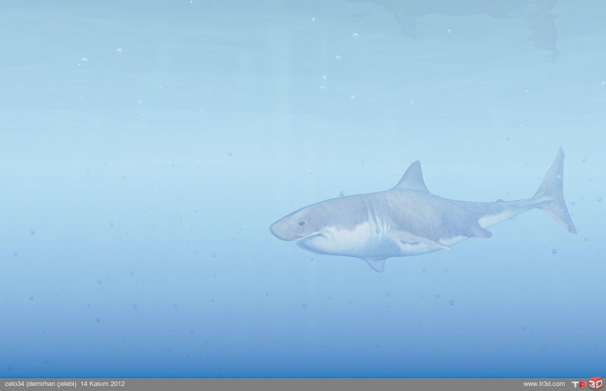 katil köpekbalığı 1
