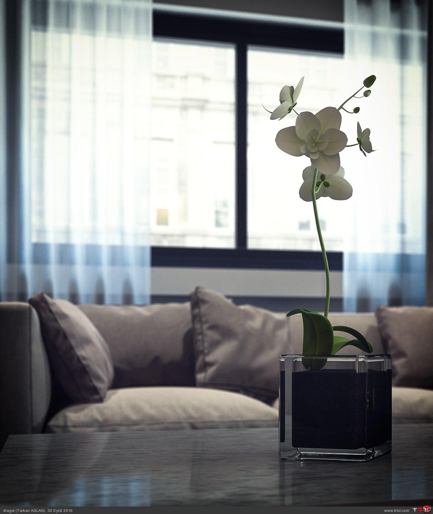 Lounge for New Sofas - Solitudine 1
