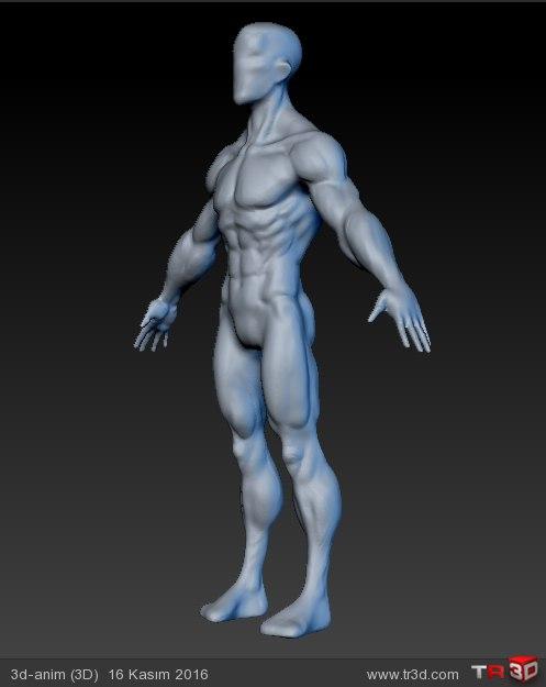anatomy eskizi 1