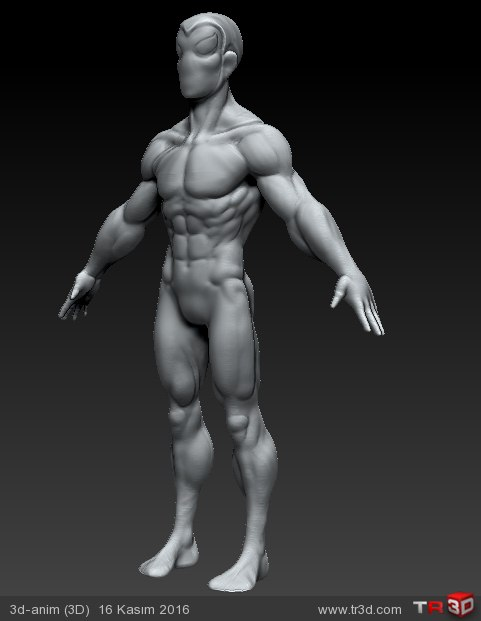 anatomy eskizi 4