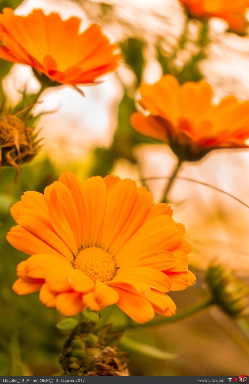 Çiçek Fotoğrafı