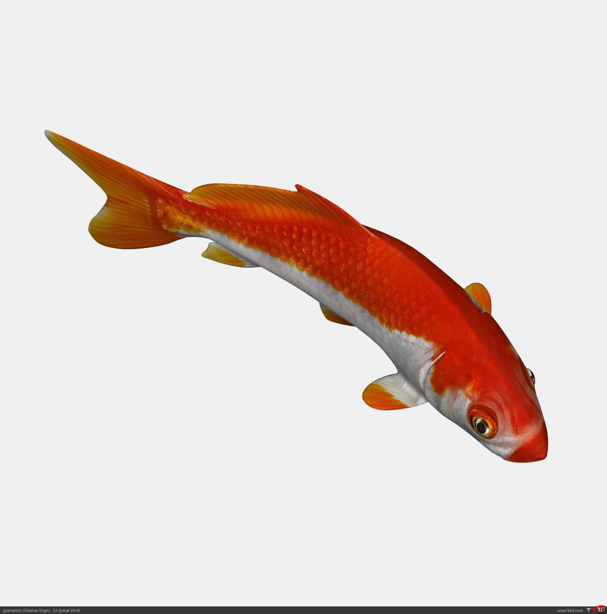 Koi Balığı 1