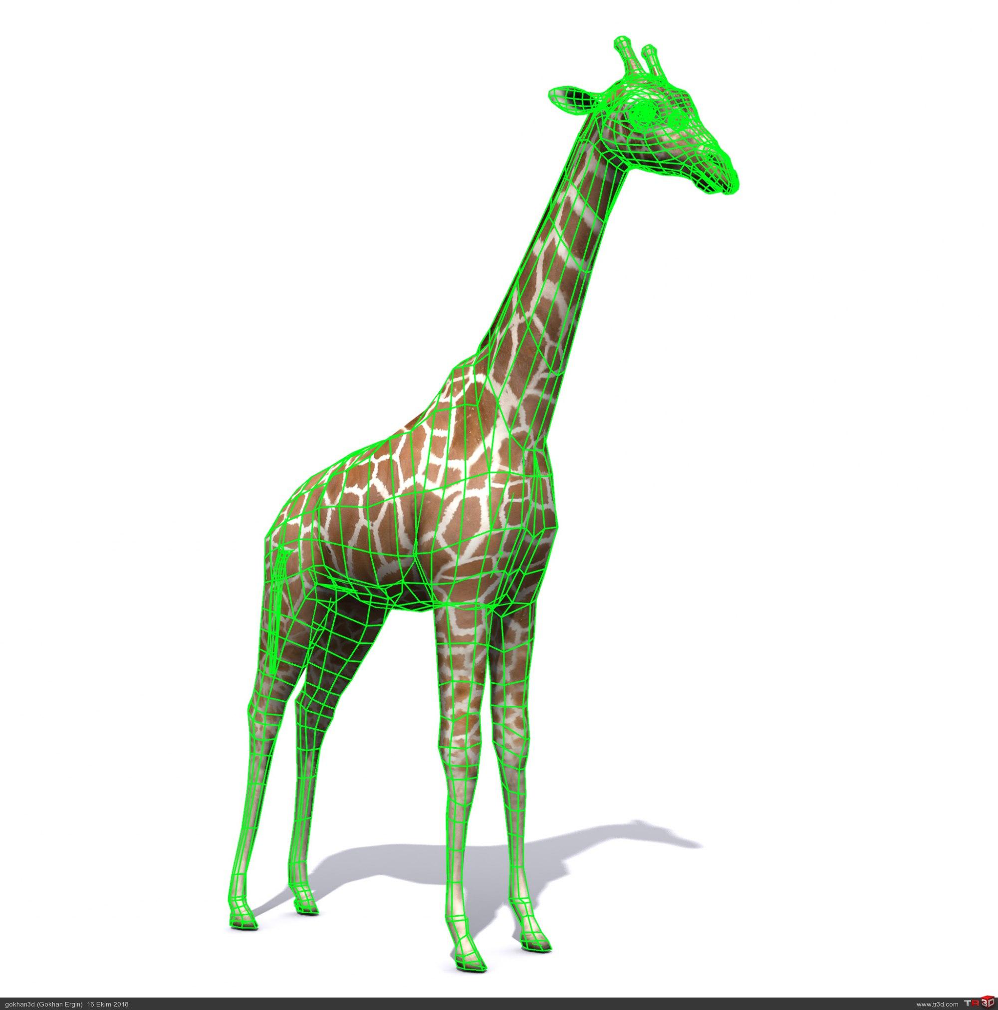 Zürafa ücretsiz model 1