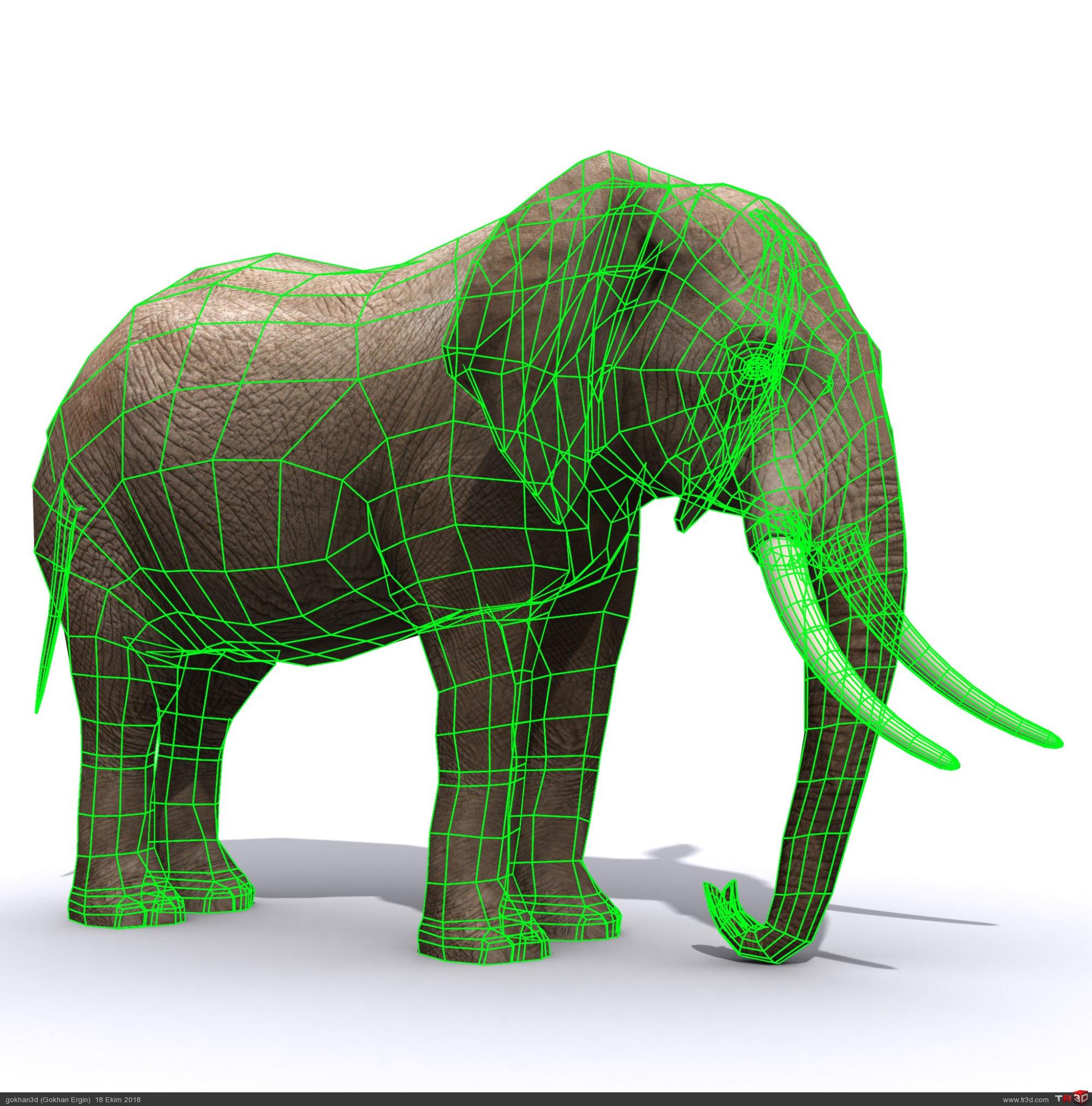 Fil ücretsiz model 1