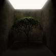 Yalnız Ağaç 2
