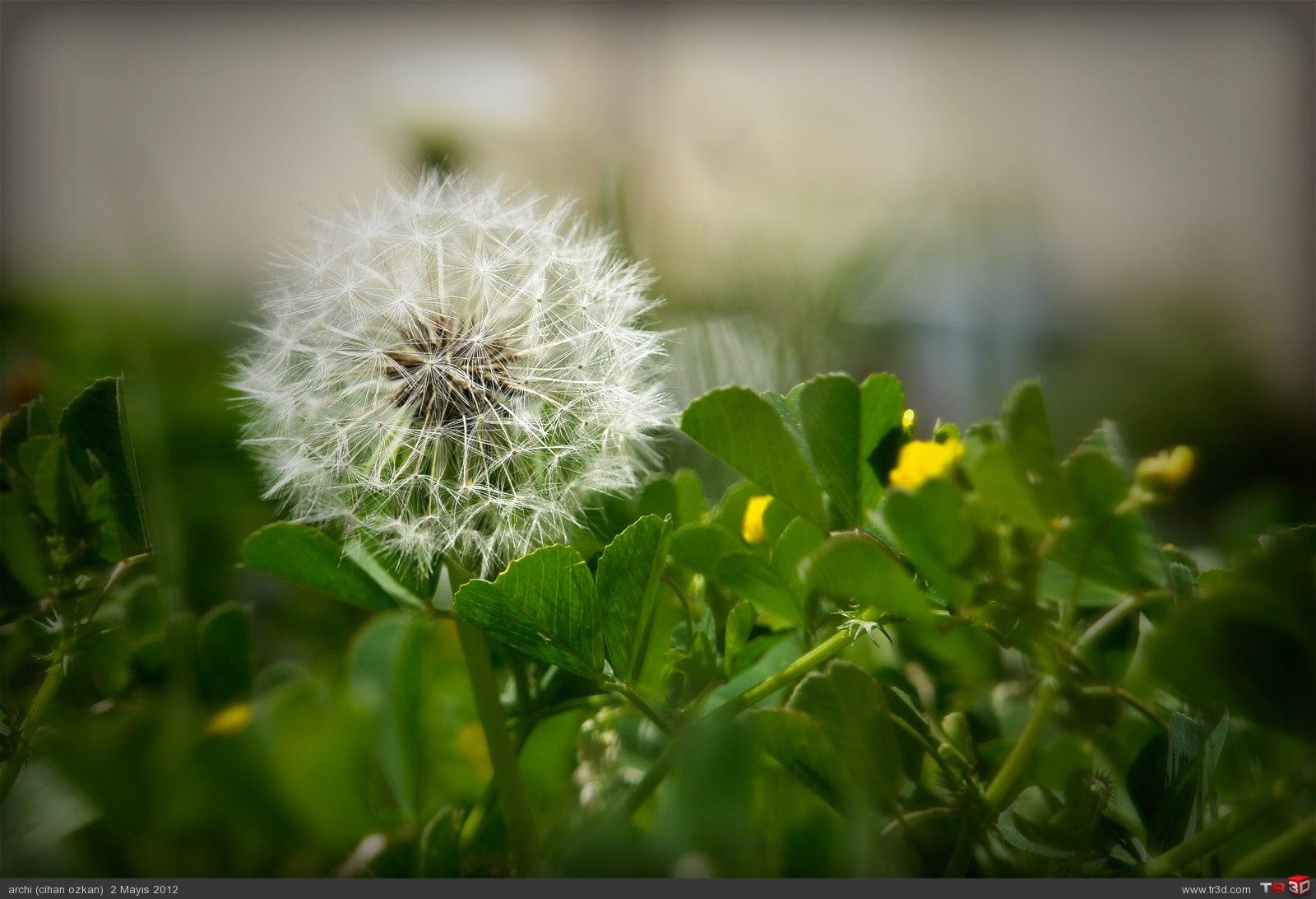 çiçek böcek 1