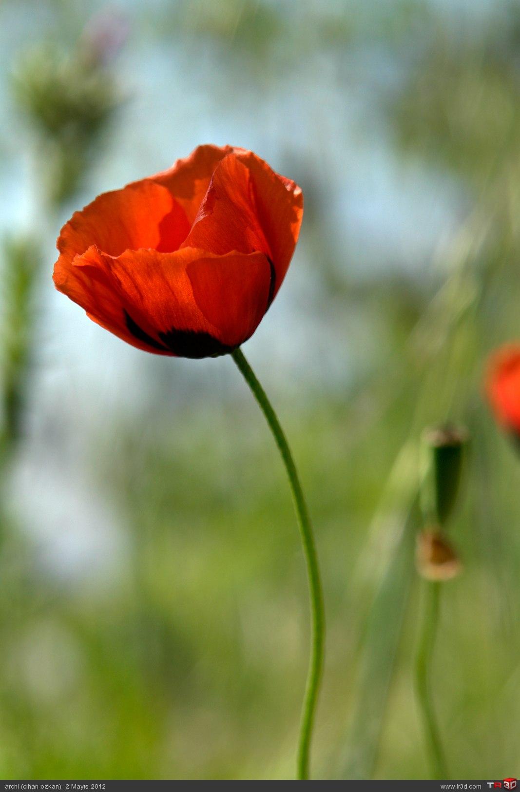 çiçek böcek 4