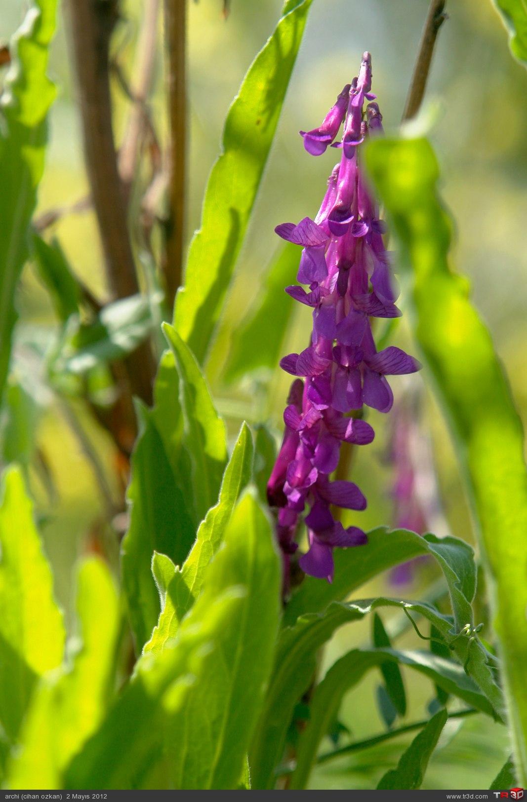 çiçek böcek 5