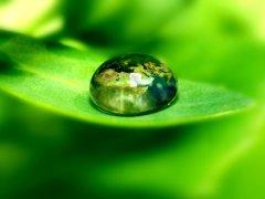 Yeşil Dünya